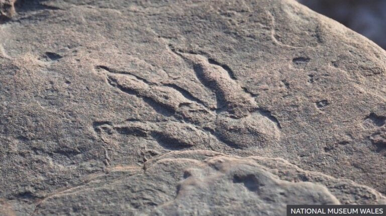 Dinosaur footprint, Source: National Wales Museum
